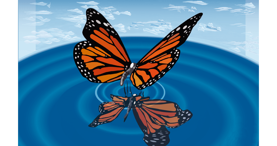 illustrator borboleta em desenho digital vetorizado