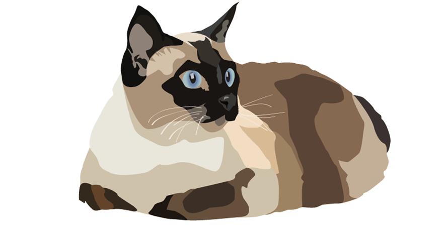 illustrator gato em desenho digital vetorizado